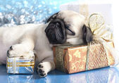 Pug puppy and gifts — Stock Photo