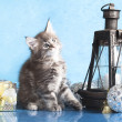 Kitten and gift — Stock Photo #7934611