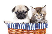 Kitten and puppy — Stock Photo