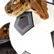 Soccer concept ,  football and snake - Stock Photo