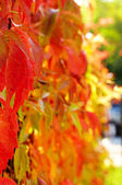 Red and green autumn leaves background — Stock Photo