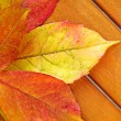Autumn Leaves over wooden background. — Stock Photo #7382101