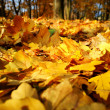 Colorful background of fallen autumn leaves — Stockfoto #7475215