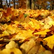 Colorful background of fallen autumn leaves — Foto de Stock   #7475215