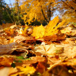 Colorful background of fallen autumn leaves — Stockfoto #7475271
