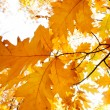 Colorful background of fallen autumn leaves — Stok fotoğraf #7475418