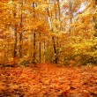 Colorful background of fallen autumn leaves — Stockfoto #7475593