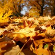 Colorful background of fallen autumn leaves — 图库照片 #7475639