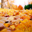 The colorful Autumn Background is made of maple leaves. — Stock Photo #7500054