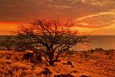 Закат недалеко от пляжа вулканическими камнями. Гавайи — Стоковое фото