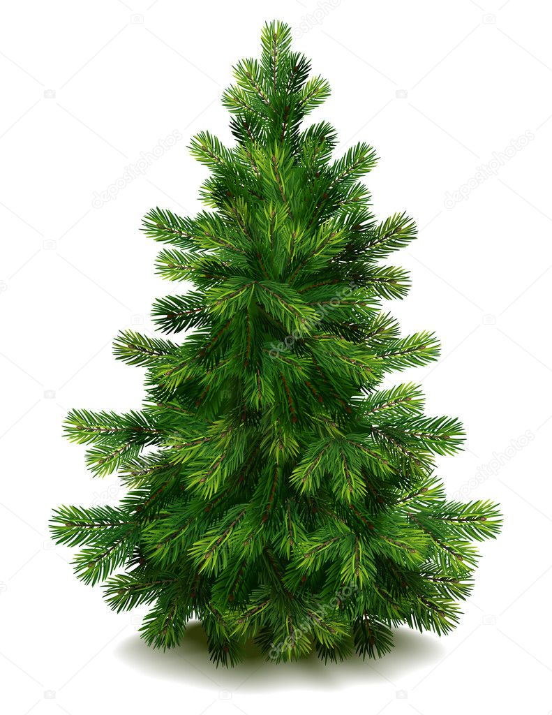 Vector illustration - pine tree on white background — Stock Vector #6861825