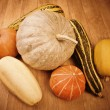 Pumpkin round oval long orange yellow green — Stock Photo