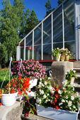 Flores em vasos, ao lado de uma estufa — Foto Stock