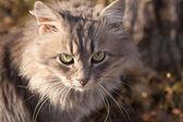 Portrait of a beautiful cat cute — Stock Photo