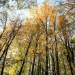 Trees in autumn — Stock Photo #7368641