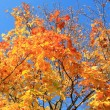 Yellow leafs on tree — Stock Photo #7368644