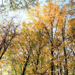 Trees in autumn — Stock Photo #7531712
