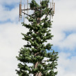 Stealth Pine Antenna Tree. - Stock Photo