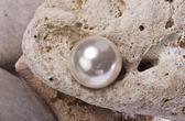 South Sea Pearl. — Stock Photo