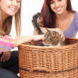 Royalty-Free Stock Photo: Female friends with cat
