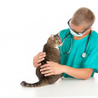 Man vet and grey cat - Foto Stock