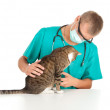 Man vet and grey cat — Stock Photo