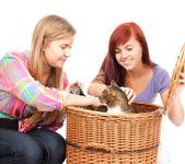 подруг с кошкой — Стоковое фото