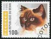 国内的猫 — 图库照片