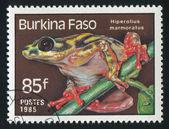 żaba — Zdjęcie stockowe