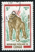 Gorilla — Foto de Stock
