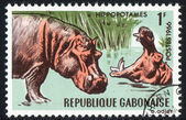Hipopótamos — Foto de Stock