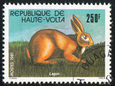 Kaninchen — Stockfoto