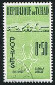 Gazelle dorcas — Photo