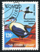 Stamp printed by Congo — Stock Photo