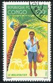 Pojke samla kokosnötter — Stockfoto