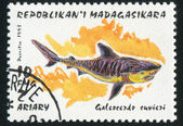Rekin — Zdjęcie stockowe