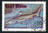 メジロザメ属 melanopterus — ストック写真