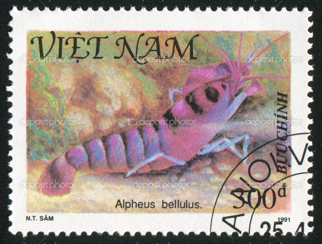 VIET NAM - CIRCA 1991: stamp printed by Viet Nam, shows Shellfish, Tiger pistol shrimp, circa 1991 — Stock Photo #7422964