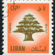 Cedar of Lebanon - Stock fotografie
