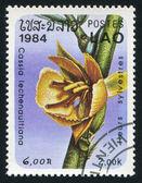 Cassia lechenaultiana — Stock Photo
