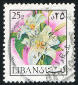 Lilie — Zdjęcie stockowe