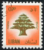 Cedro del libano — Foto Stock