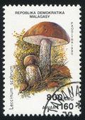 Mushroom — Photo