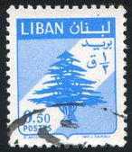 Cedar of Lebanon — Stock Photo