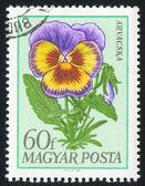 Kwiat lato — Zdjęcie stockowe