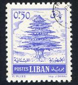 Cedar of Lebanon — Zdjęcie stockowe
