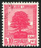 レバノンのヒマラヤ スギ — ストック写真
