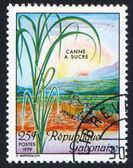 Sugar Cane Harvest — Stock Photo