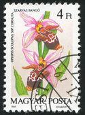 Ophrys scolopax cornuta — Stock Photo