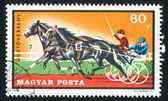 Paardensport — Stockfoto